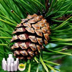 pine oil at rs 1100 kilogram govind nagar kanpur id 16824576262