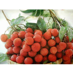 Lychee Cold Storage Rental Services