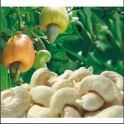 Cashew Kernals