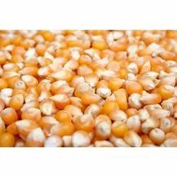 KPA Yellow Dried Maize