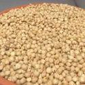 Sorghum Seeds, Packaging Type: Pp Bag, Packaging Size: 5-10kg