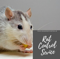 Rat Control Service