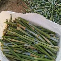 Rivashaa Natural Napier Grass Seeds, For Agriculture, Packaging Type: Bag