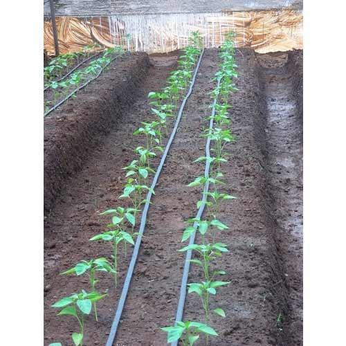 Thin Wall Drip Irrigation System