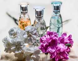 Expose Fragrance