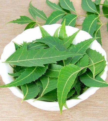FARMVILLA Neem Leaves, Rs 80 /kilogram Farmvilla Food Industries ...