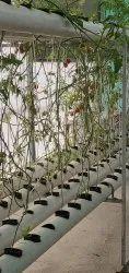 40 Plants NFT System