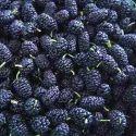 Frozen Mulberry Pulp