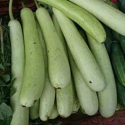 Bottle Gourd Vegetable Seeds