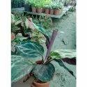 Garden Well Watered Indoor Plant