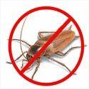 Cockroaches Pest Control Service