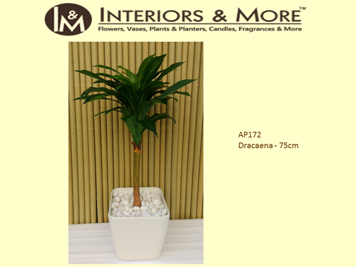 Plastic Artificial Dracaena Indoor Plant