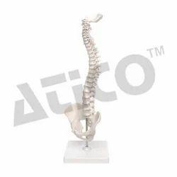 ATICO White Mini Spine Model