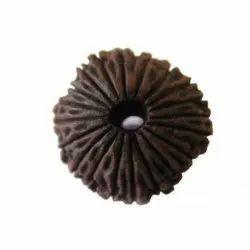 Black 20 Mukhi Rudraksha 31.95mm Energize AAA Quality Certified Bead