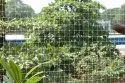 Diamond Bird Net