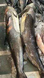 sakru Fish