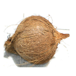 Tufted Coconut