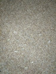 Wheat Gehun