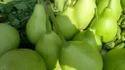 Round Bottle Gourd ( Kodu)