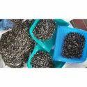 Pkm-1 La Mu Seeds