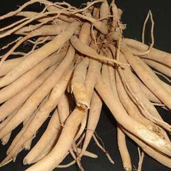 Natural Yellow Dry Shatavari Roots