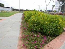 Professional Landscape Design Service