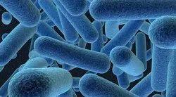 Bacillus Vallismortis