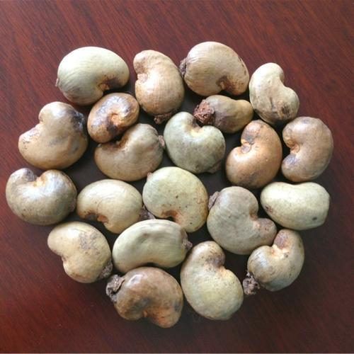 Raw Cashew Nuts, Pack Size: 20 And 100 Kg
