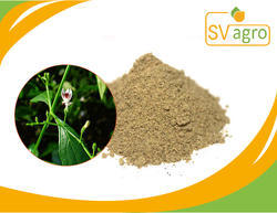 Andographis Paniculata Dry Extract