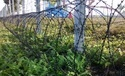 Razor Concertina Wire