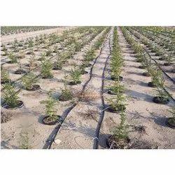 Garden Drip Irrigation