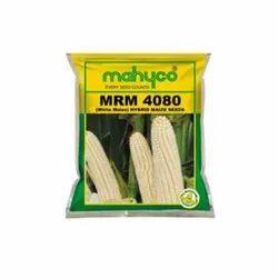Maize Hybrid