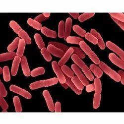 Bacillus Polymyxa Probiotics