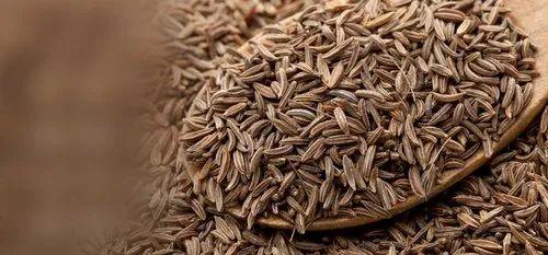 300 Graines de Cumin Cuminum cyminum seeds