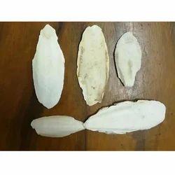 Cuttle Fish Bone 4 - 7