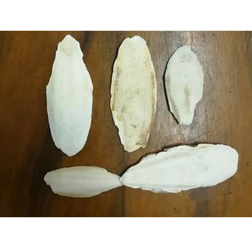 Cuttle Fish Bone 4'  - 7' , Packaging Type: Pp Bag, for Bird' s feed