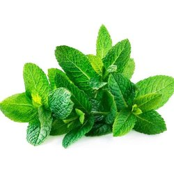 Green Organic Mint Leaves, Packaging Size: 20kg, 50kg