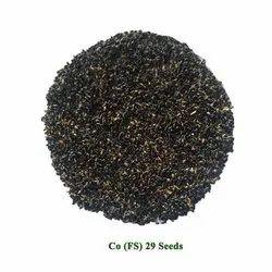 Cofs 29 Multicut Fodder Seed