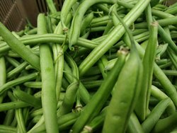 Green Beans for Kitchen