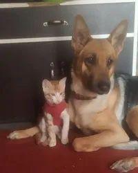 Pet Home Boarding Service