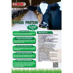 Bypass Protein with Fat
