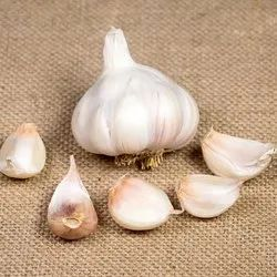 White Garlic Seeds, For Farming, Packaging Size: 50 Kg