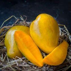 Benishan Mango Plant