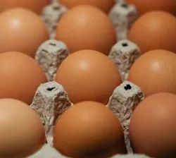 天然家禽褐蛋,包装类型:蛋盘