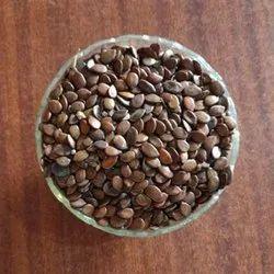 Natural Babool Seeds, Packaging Type: Jute Bag, 30-50 Kg