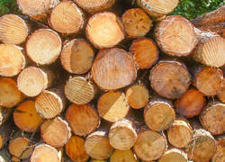 Southern Yellow Pine Logs, Thickness: .75-1.25 inch