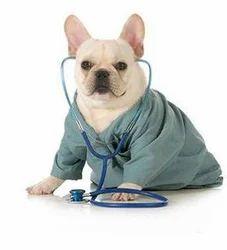 Diagnostics Services