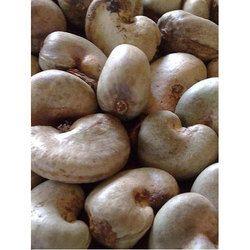 Raw Cashew Nut, Pack Size: 80 Kg / 50 Kg, Packaging Type: Jute Bags