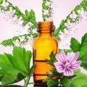 Essential Oils Basil