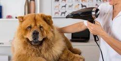Sparkle Treatment Dogs
